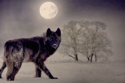 Wolf Canvas Wall Art -  Black Wolf Moon